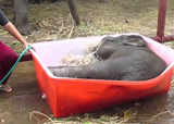 bain de bébé éléphant