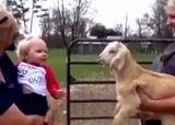 petite fille et chèvre