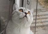 chat concentré