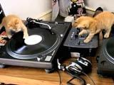 chaton et platine