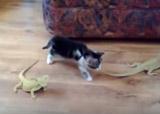 chat et lézard