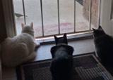 des chats bien concentrés