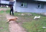 chien et chat ninja