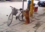 chien et vélo