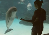 dauphin aime les acrobaties