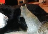 écureuil et chien